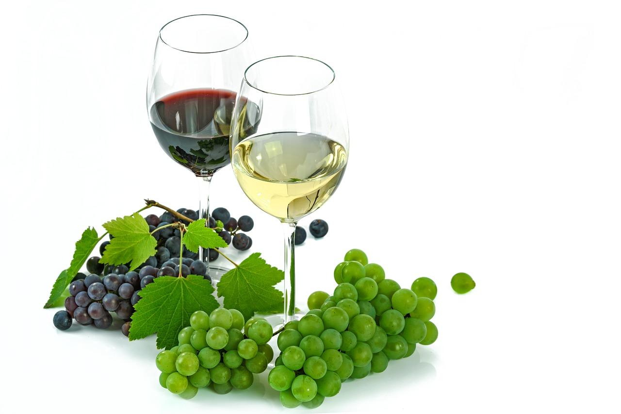 identificazione varietà di uva o vite